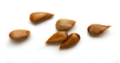 apple-seeds PNG